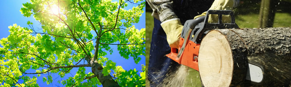 Tree Services Nine Mile Falls